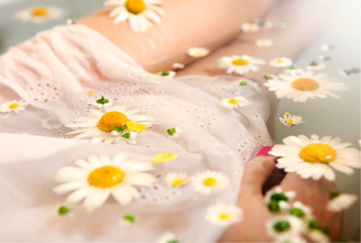 Ромашка лечебные свойства и противопоказания для женщин